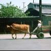 tai_chung_slow_freight.jpg